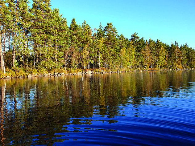 Bilden visar granar i solljus som står längst med ett vattenbryn.